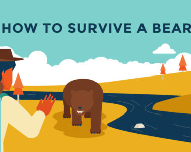 Surviving a bear attack - our top tips