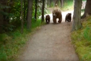 hiking with bears video